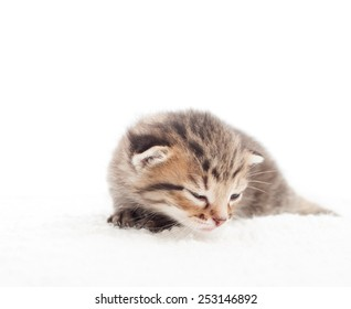 sleepy tabby kitten on white blanket