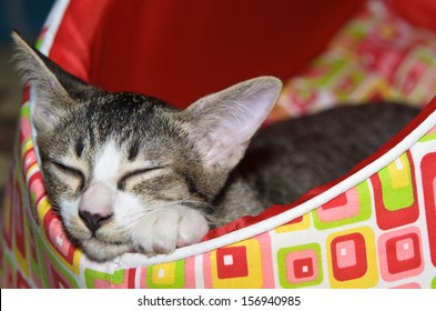 Sleepy Tabby on Red Cat Bed