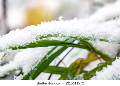 Sleet and snow on the green grass close up, background for text
