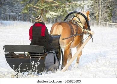 Sleigh ride with horse drawn sleigh