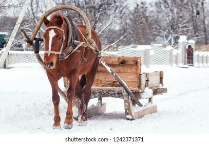 Sleigh ride through winter landscape