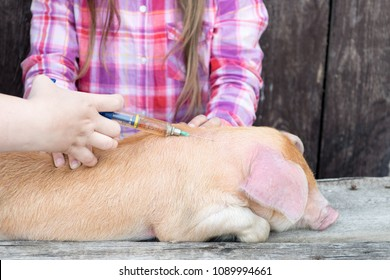 Slender woman, veterinarian in white coat, makes a vaccine injection from swine fever for young red pig. A young girl watches and learns to work doctor.