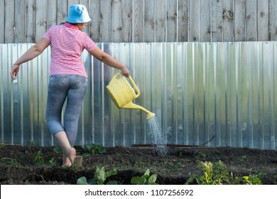 Slender young peasant woman in striped blouse, sunglasses and jeans, sprinkles tomatoes and potatoes from yellow watering can.