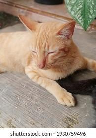 slepy cat on the floor - Shutterstock ID 1930759496