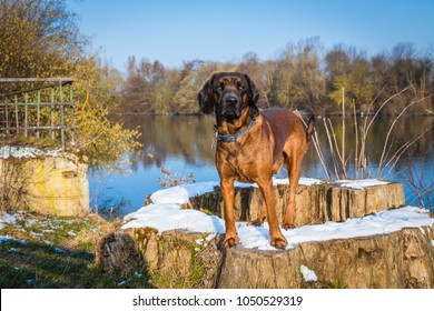 sleuth stands on a stem with a lake in background