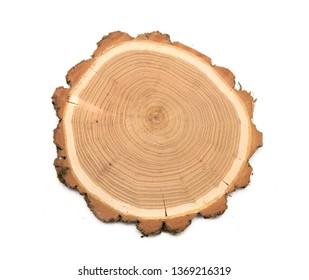 A slice of acacia wood representing profile of cut tree.