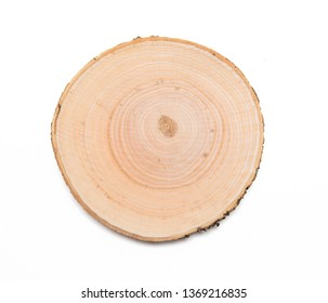 A slice of beech wood representing profile of cut tree.