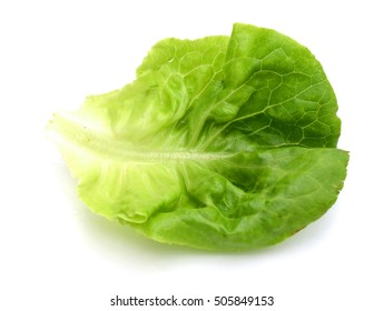 Slice of Green lettuce isolated on White Background