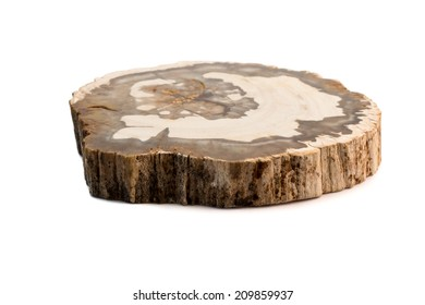 A slice of petrified wood found in Madagascar. Isolated on a white background.