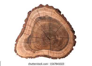 A slice of a tree on a white background. Walnut
