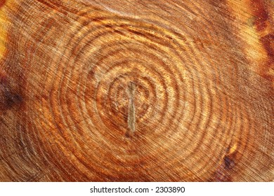 Slice Of Tree Trunk