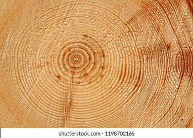 slice of wood timber natural background, wood rings