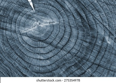 slice of wood timber natural background, x-ray effect