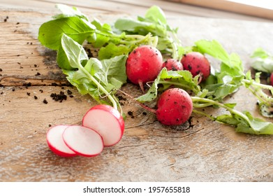 Slicing a farm fresh bunch of radishes for salad ingredients on a rustic wooden table with scattered remnants of soil