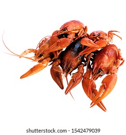 Slide of 5 red boiled crayfish. Delicious delicacy dish. Don crayfish isolated on a white background.