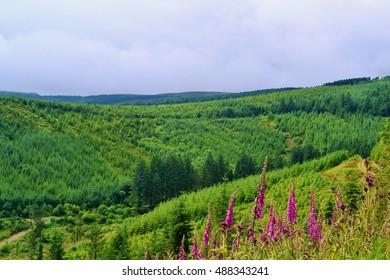 Slieve Bloom mountains, Ireland