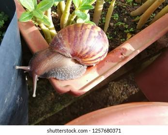 slimy garden snail