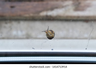 a slimy snail on glass