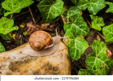 Slimy Snails on a Stone