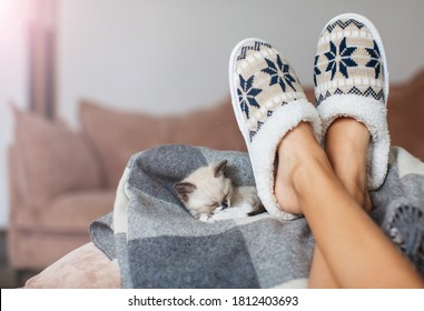 Slippers on women's legs and kitten. Cat near soft comfortable home slipper
