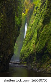 A sliver of falls just peaks around the mossy walls of Oneonta Canyon in the Columbia River Gorge.