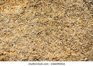 Sliver wood. Wooden texture scrap nature. Sliver Texture. Texture of wood shavings, sliver