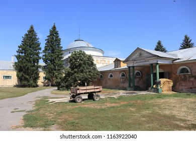 SLOBODA, VORONEZH OBLAST / RUSSIA - AUGUST 21 2018: Khrenovskoy stud farm at Voronezh Oblast. The place of origin of the Orlov trotter horse breed