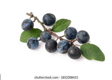Sloes - Fruits of blackthorn (Prunus spinosa) isolated against white background