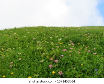 Slope under Crna Prst in Triglav national park and Julian alps, Slovenia with wildflowers incl. pink blooming Heracleum austriacum - Shutterstock ID 1571458564