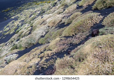 Slopes of Mount Etna volcano covered with carpets of various plants and flowers in autumn. Sicily, Italy