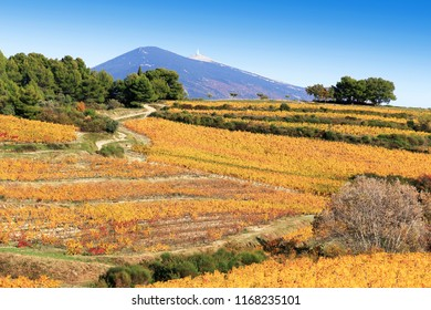 The slopes of vineyards of Mont Ventoux in Provence, France.