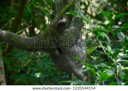 Sloth Manuel Antonio National Park Costa Stock Photo Edit Now