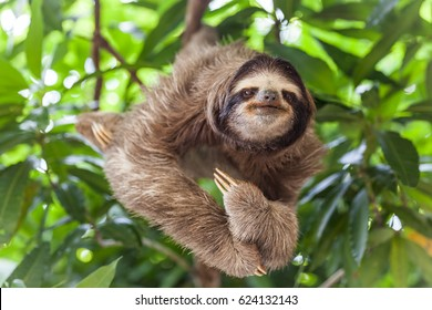 The sloth on the tree