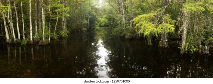 Slough through Cypress Swamp in Everglades National Park, Florida