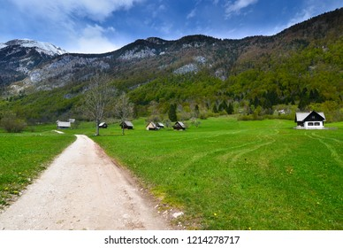 Slovenian Meadow, mountain trail