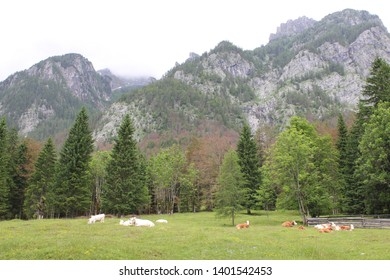 Slovenian mountains with forest scenerio - Shutterstock ID 1401542453