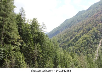 Slovenian mountains with forest scenerio - Shutterstock ID 1401542456