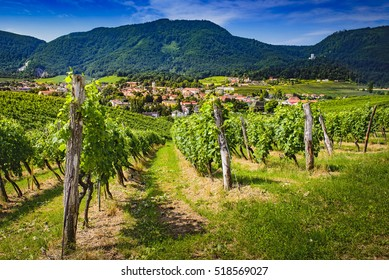 Slovenske Konjice, Slovenija, from nearby hill Zlati gric, famous for it's vinery and vineyards, town depicted through vines, old castle top left