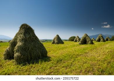 Slovenske polia - Shutterstock ID 235175722