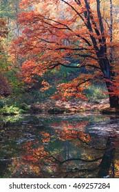 slow autumn river as nice seasonal background
