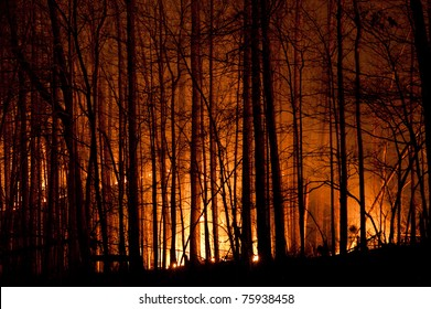 Slow burn forest fire at night.