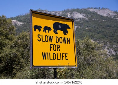 Slow down for wildlife sign in mountain forest