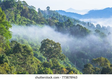 slow floating fog blowing cover on the top of mountain look like as a sea of mist. In the morning the cold weather is make floating fog on the mountain as a sea of mist