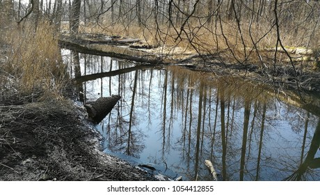 Slow flowing river crossing springtime riparian stand in full sun, Bialowieza Forest, Poland, Europe