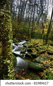 A slow moving creek and hearts carved in an aspen in the fall