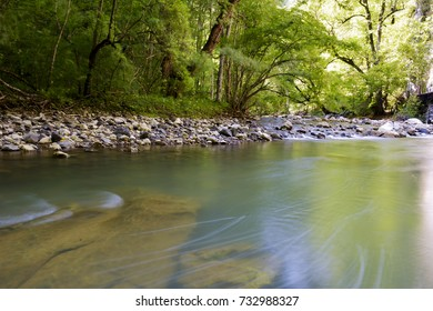 A slow moving stream in a forest
