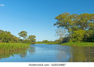 Slow Moving Stream in the Pantanal Wetlands in Brazil
