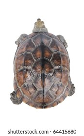 a slow moving tortoise isolated on white