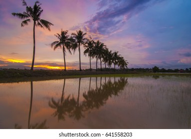 Slow Shutter Burning Sunset with Reflection of tropical tree. Motion Blur due to Slow Shutter Shot