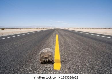 Slow tortoise walking along center of remote desert highway